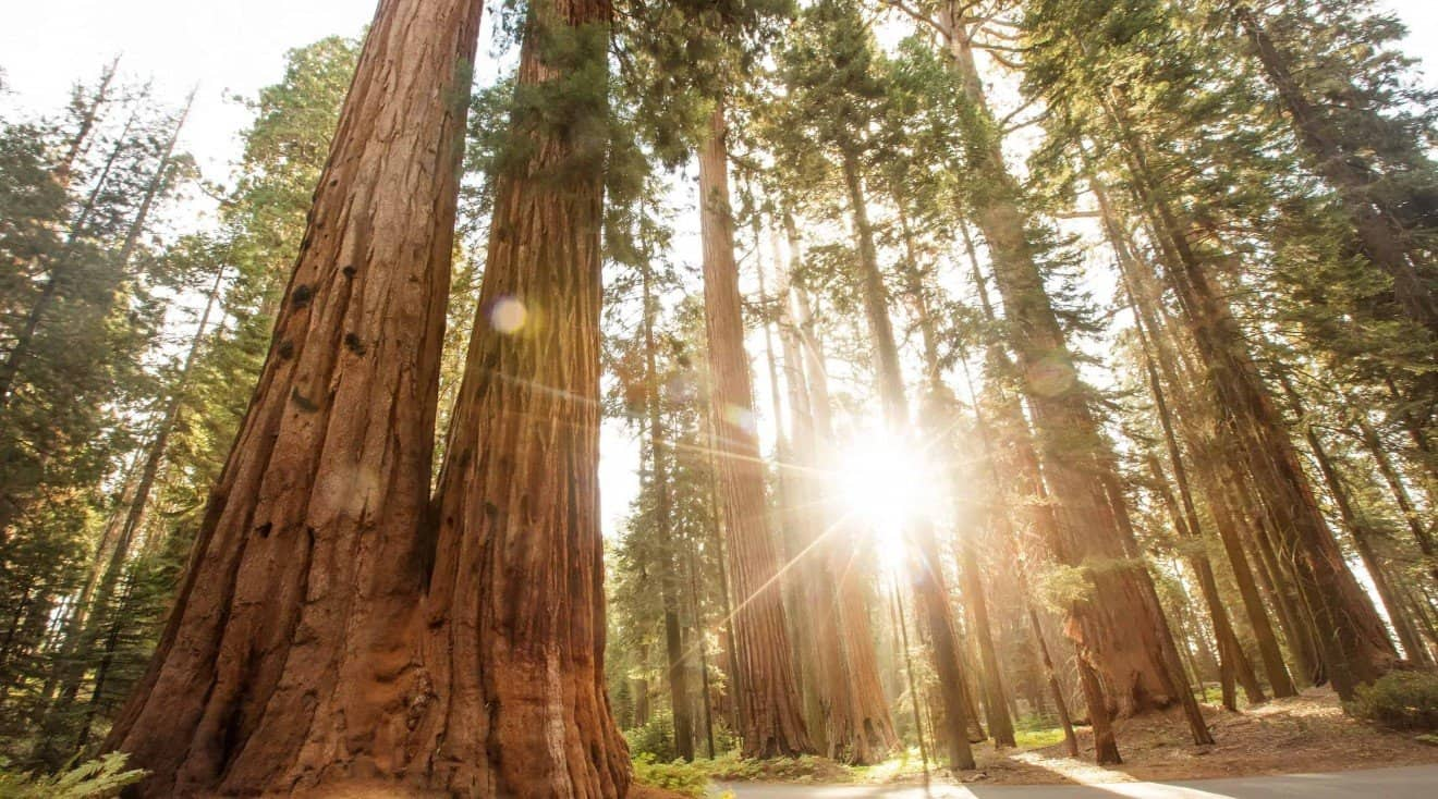 Things to do in Sequoia National Park
