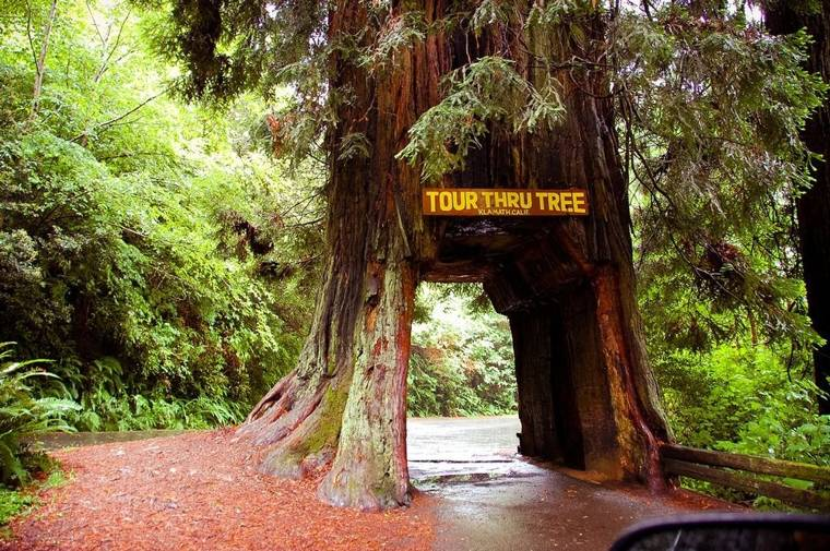what to do in redwood national park